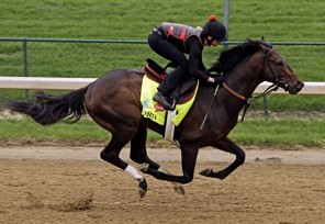 Exercise rider Jenn Patterson rides Kentucky Derby entrant Orb for a workout at Churchill Downs Monday, April 29, 2013, in Louisville, Ky. (AP Photo/Garry Jones)